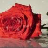 Kā pavadīsim Sv.Valentīna dienu