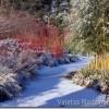 Atdzīvinām dārzu ziemā