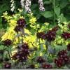 Divgadīgās puķes mūsu dārzā