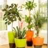 10 visvērtīgākie istabas augi