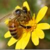 Kas vēlies būt Tu – muša vai bite?