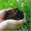 Dārzs bez ķimikālijām – mūsu dzīves enerģijas avots
