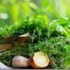 Dārzs bez ķimikālijām -12 zelta padomi