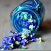Kā telpā uzburt ziedu smaržu