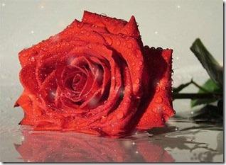 Sv.Valentina diena