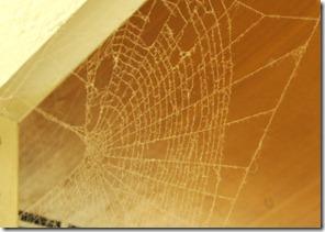 zirneklu tikli istaba
