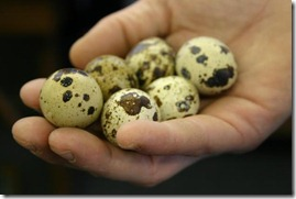 paipalu olas (2)