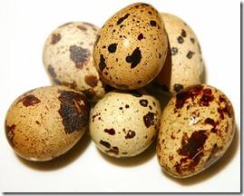 paipalu olas (5)
