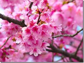 pavasara laiks