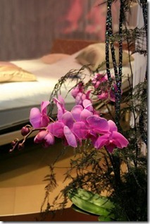 659275-orchid-in-bedroom