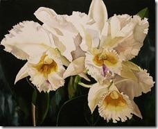 Cattleya orhidejas