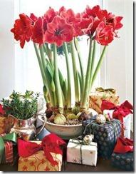 dzīvie ziedi Ziemassvētkos (3)