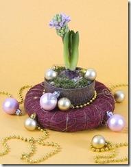 dzīvie ziedi Ziemassvētkos (6)