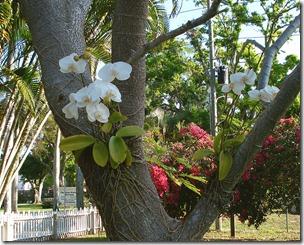 orhidejas savvaļā