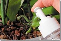 orhideju meslošana