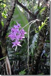savvalļas orhidejas (2)