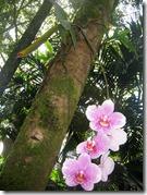 savvalļas orhidejas (3)
