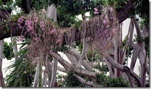 savvalļas orhidejas (4)