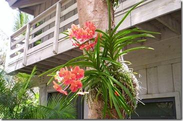 savvalļas orhidejas (7)