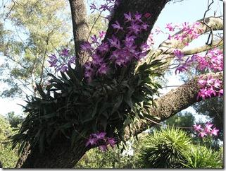 savvalļas orhidejas (8)