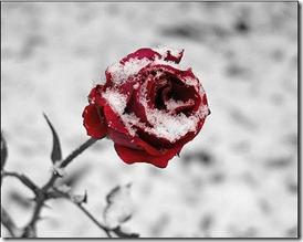 patiesa mīlestība (8)