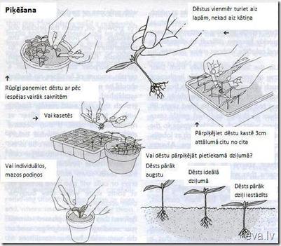 pikesana (2)