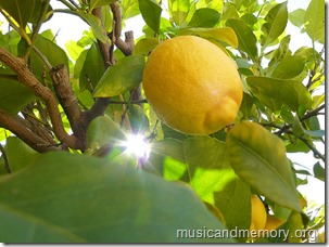 citroni_koka
