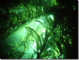 alges
