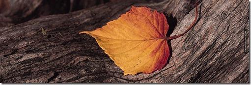 Autumn-Leaf-Tree